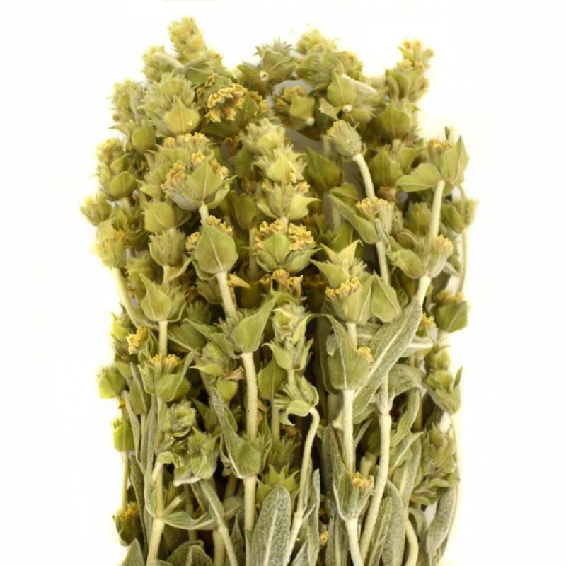 Thé des montagnes crétoises  Malotira -  10 g