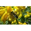 Miel grec biologique d'Asfaka - MELINO - 400 g